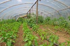 100% organiskt växthus Arkivfoto