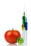Organisme génétiquement modifié Photo libre de droits