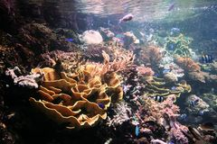 Organismi marini Fotografia Stock Libera da Diritti