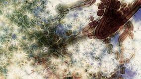 Organismo del fractal Fotos de archivo libres de regalías