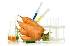 Organismo geneticamente modificato Fotografie Stock Libere da Diritti