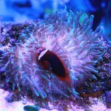 Organismo marinho [flysea-03] fotografia de stock