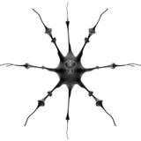 Organismo micro Imagen de archivo libre de regalías
