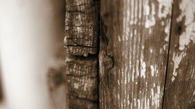 Organización de la hormiga en la pared de madera vieja almacen de metraje de vídeo