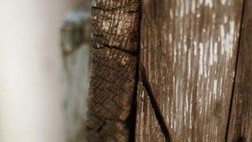 Organización de la hormiga en la pared de madera vieja metrajes