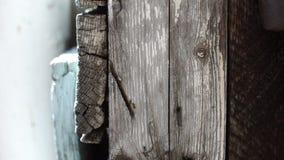 Organización de la hormiga en la pared de madera vieja almacen de video