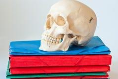 Organizador del cráneo Imágenes de archivo libres de regalías