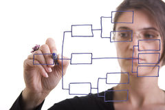 Organization chart. Businesswoman drawing an organization chart on a white board (focus on the draw and point of the pen stock images