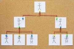 Organization chart on a cork bulletin board Stock Image