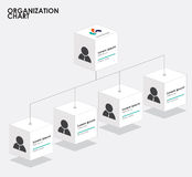 Organization chart infographics with tree,  Box organization  Royalty Free Stock Photography