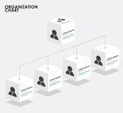 Organization chart infographics with tree,  Box organization  Royalty Free Stock Photography