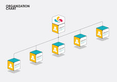 Organization chart infographics with tree, Diagram flow.  vector. Illustration Stock Photos