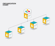 Organization chart infographics with tree, Diagram flow.  vector Stock Image