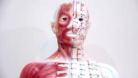 Organization of the human body stock video