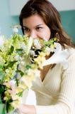 Organizzazione del fiore Immagine Stock