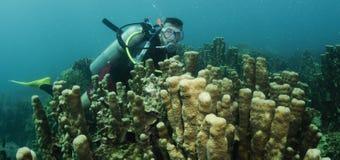 Organkoralle und Unterwasseratemgerättaucher Stockbild