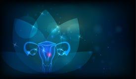 Organo riproduttivo femminile Immagine Stock