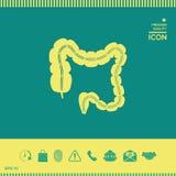 Organo umano - l'intestino crasso illustrazione vettoriale