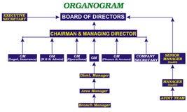organogram Obraz Royalty Free