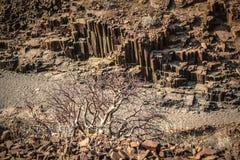 Organowe drymby, Namibia Zdjęcie Royalty Free