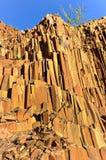 Organowe drymby - Twyfelfontein, Damaraland, Namibia Fotografia Stock