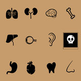 Organs vector health care set Royalty Free Stock Image