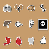 Organs vector health care set Royalty Free Stock Photography