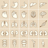 Organs_yellow. Internal human organs. Anatomy set illustration. Vector of outline medical icons for infographic Stock Images