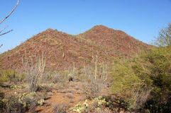Orgelpfeifenkaktus-Nationaldenkmal, Arizona, USA lizenzfreie stockbilder