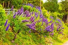 Orgulho de Madeira Fotos de Stock Royalty Free