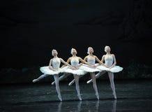 Orgulhoso do dança-bailado pequeno O Lago das Cisnes da cisne quatro Imagens de Stock
