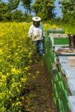 Orgulloso apicultor que mira sus abejas fotos de archivo