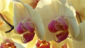 Orhid, солнце, цветок, весна, лето стоковые фотографии rf
