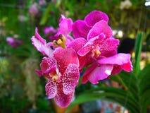 Orhid Стоковое фото RF