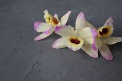 Orhid-Blumen auf dunklem Hintergrund Kopieren Sie Platz Lizenzfreies Stockfoto