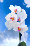 Orhid flower Stock Photos