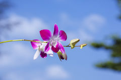 Orhid flowers on tropical backgraund, blue sky bokeh Stock Images