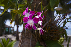 Orhid flowers on tropical backgraund, palm tree Royalty Free Stock Photography
