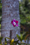Orhid flowers on tropical backgraund, palm tree bokeh Royalty Free Stock Photos