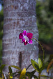 Orhid flowers on tropical backgraund, palm tree bokeh Stock Image