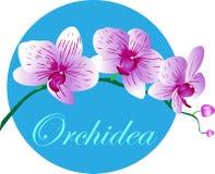 Orhidea Imagens de Stock
