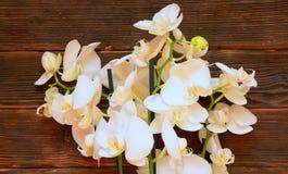 Orhides on dark wooden background. White orhides on dark wooden background Stock Image