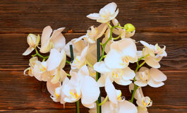 Orhides op donkere houten achtergrond Stock Afbeelding