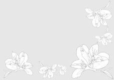 Orhids brancos ilustração do vetor