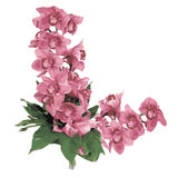 Orhids de Flor Imagenes de archivo