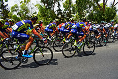 Orica Scott In The Peleton La Vuelta España. The team that includes Eseban Chaves, Adam and Simon Yates in the peleton on stage 9 of La Vuelta Espana 2017 Royalty Free Stock Photo