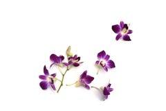 orichid bloem met bananen Royalty-vrije Stock Foto
