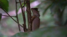 Orientał Ogrodowa jaszczurka na drzewie zbiory wideo