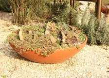 Japanese garden with pea gravel path and pot with succulents. Oriental autumn garden with pea gravel pathand pot with Sedum stock image
