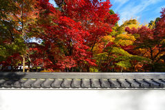 Oriental background of fall maple trees and a traditional Japanese wall crowned with tiles Royalty Free Stock Images